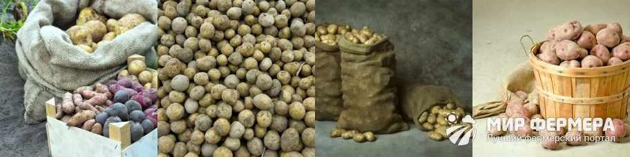 В чем лучше хранить картошку