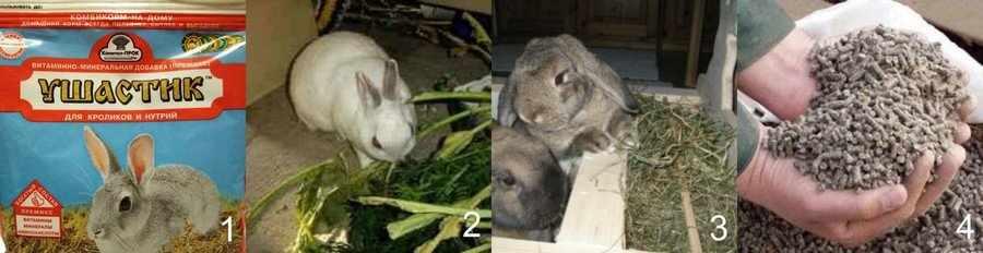 Чем кормить кроликов