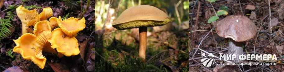 Сбор грибов в Ленинградской области