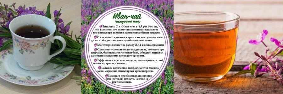 Свойства Иван-чая
