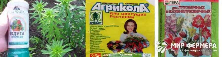 Чем поливать лилию чтобы цвела