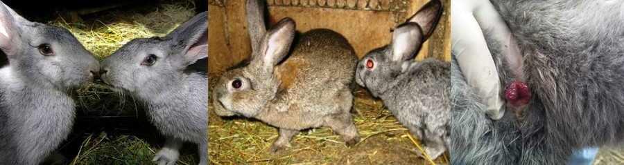 Охота у кроликов