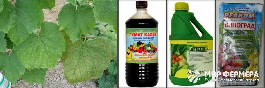 Фосфорные подкормки для винограда