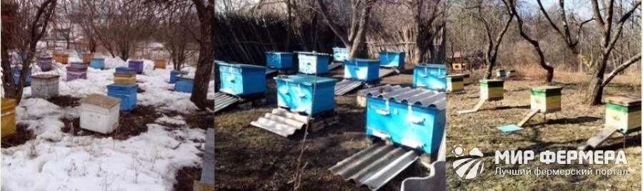 Уход за пчелами весной