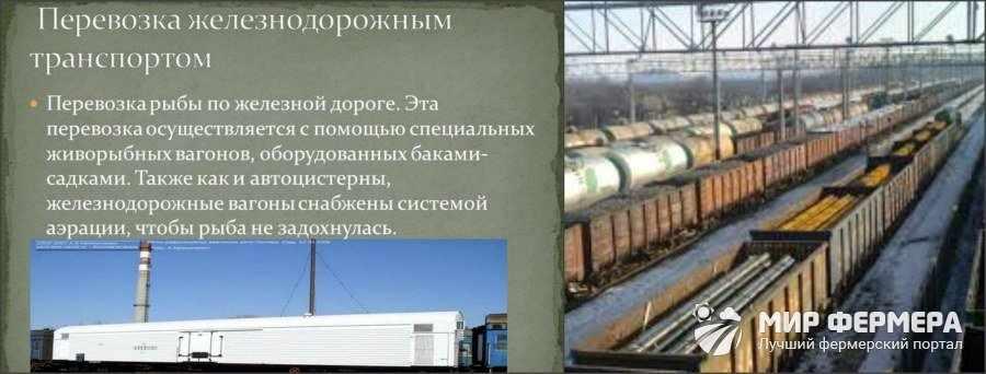 Перевозка рыбы по железной дороге