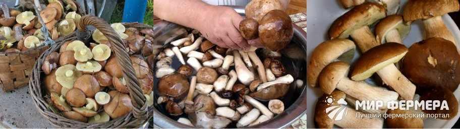 Чистка грибов перед жаркой