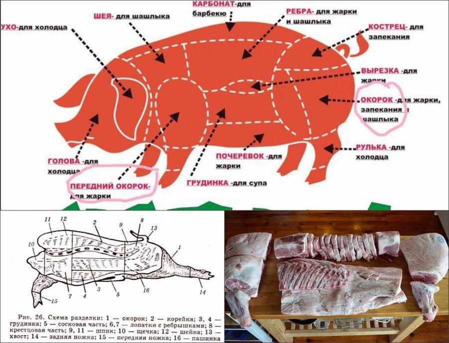 Как разделать тушу свиньи