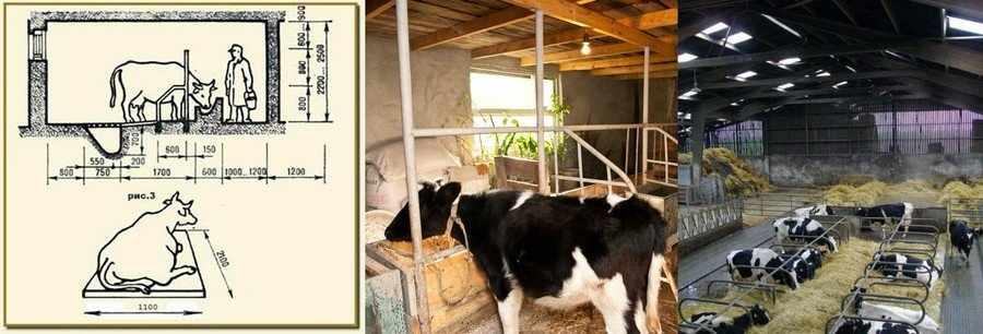 Помещение для отела коровы