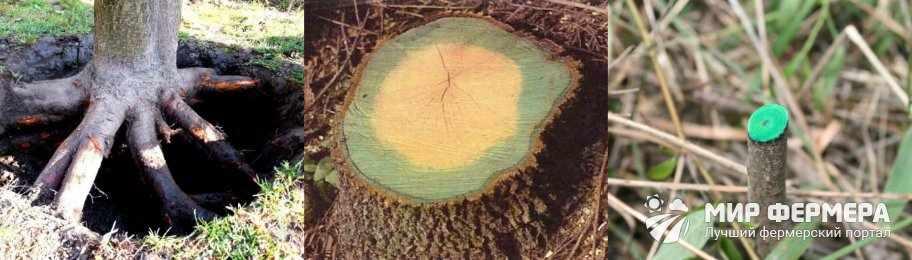 Как удалить пень дерева