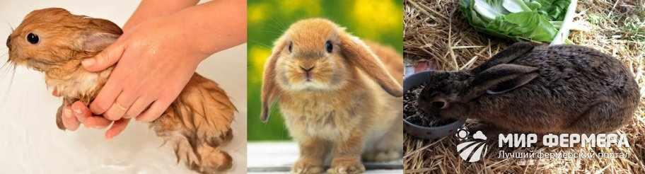 Профилактика блох у кроликов