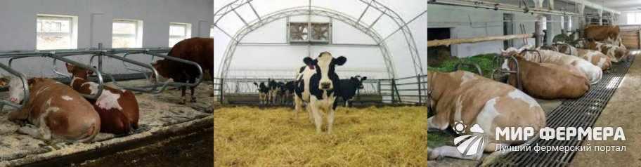 Коровник на 10 коров