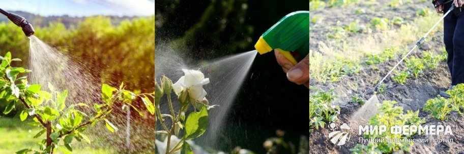 Как опрыскивать растения борной кислотой