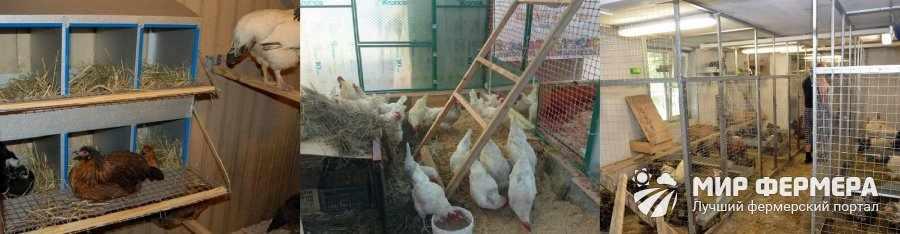 Содержание кур в сарае