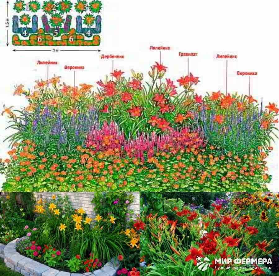 Сочетание лилейника с другими цветами