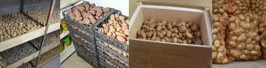 Как хранить картошку