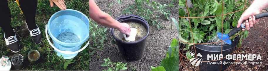 Дрожжи с золой для растений