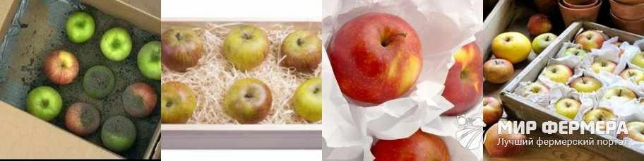 Чем пересыпать яблоки, чтобы дольше хранились
