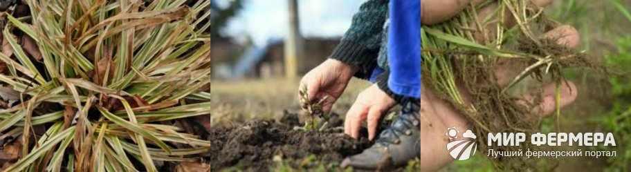 Действие гербицидов на сорняки
