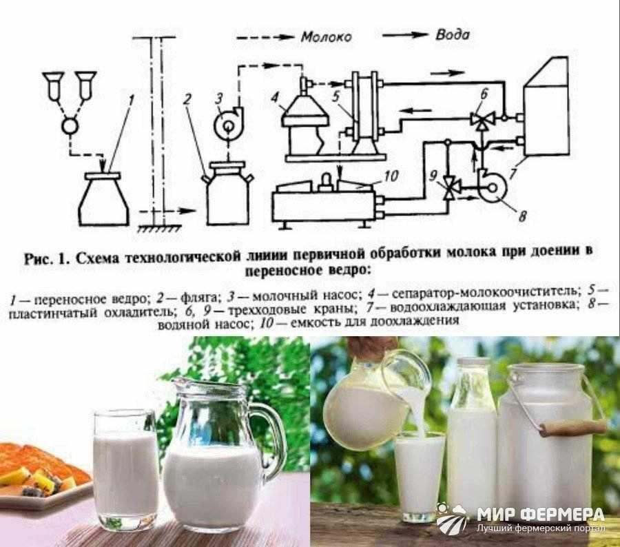 Как быстро охладить молоко