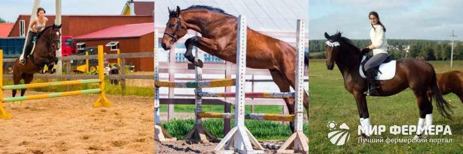 Тракененские лошади в спорте
