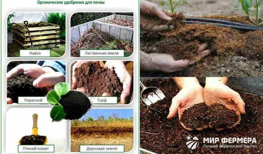Органическое удобрение в теплице
