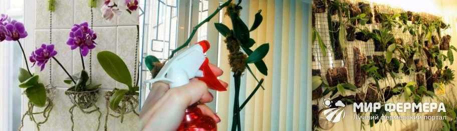 Опрыскивание корней орхидеи