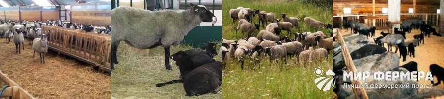 Содержание романовских овец