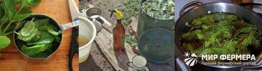 Народные средства защиты растений