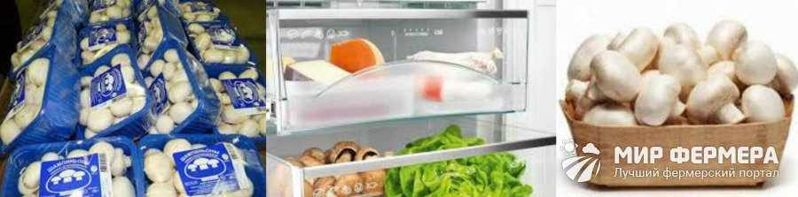 Сколько можно хранить шампиньоны в холодильнике