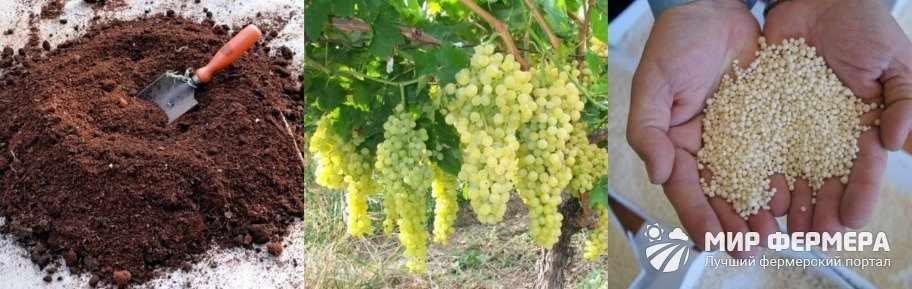 Лучшая подкормка для винограда