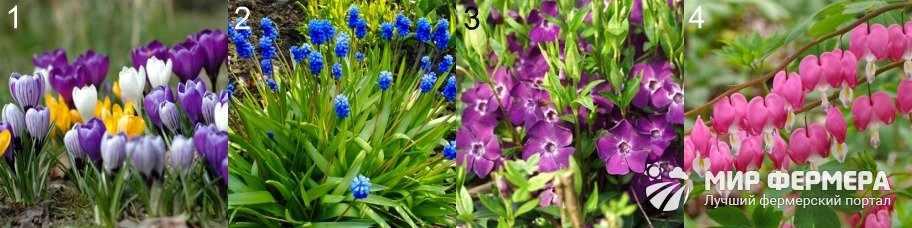 Весенние многолетние цветы