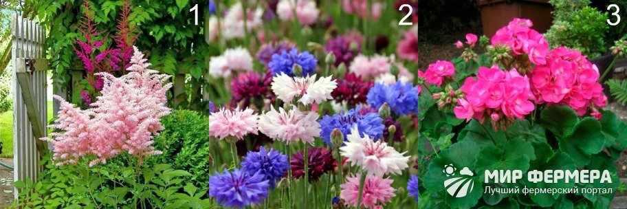 Многолетние цветы, цветущие все лето
