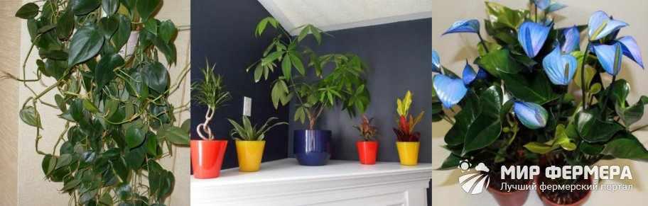 Особенности теневыносливых растений