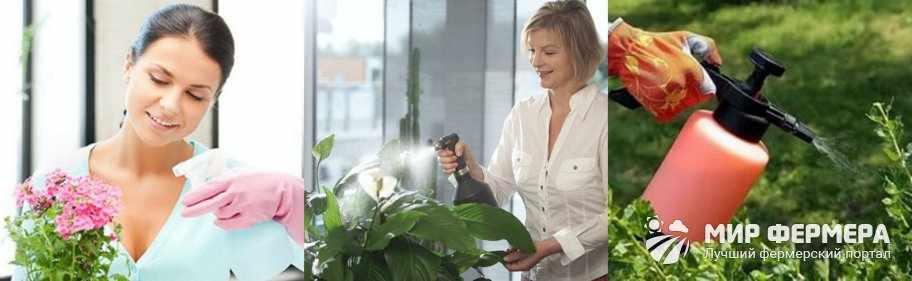 Янтарная кислота для опрыскивания цветов