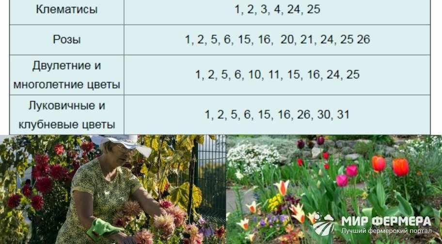 Посадка цветов в октябре