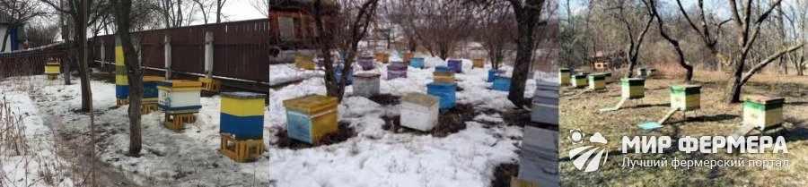 Подготовка пасеки к выносу пчел