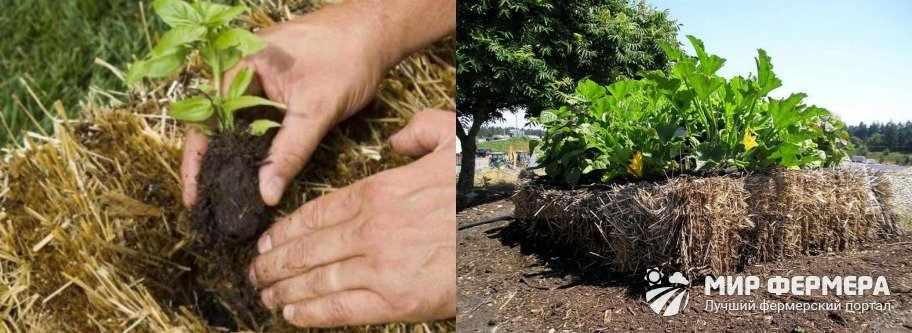 Выращивание овощей под соломой
