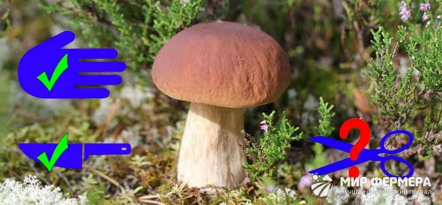 Как выкручивать грибы