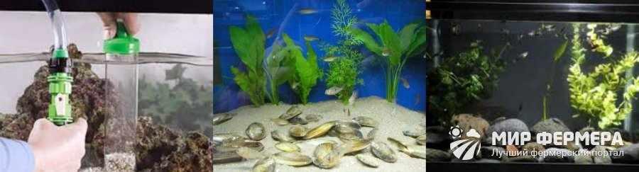Выращивание мидий в аквариуме