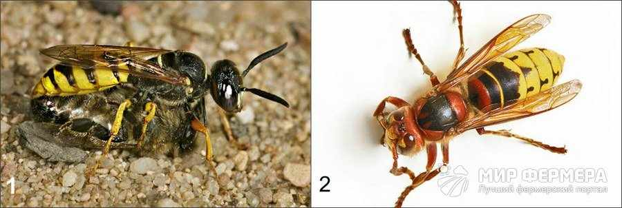 Какие есть враги у пчел