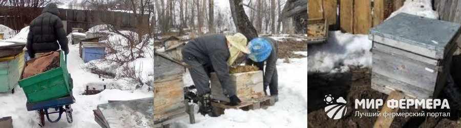 Ранняя выставка пчел из зимовника