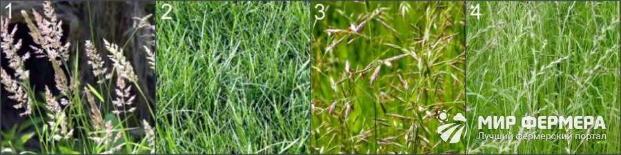 Какая трава для газона лучше