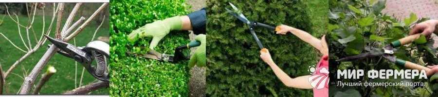 Как обрезать кустарник