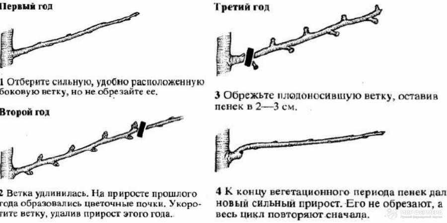 Обновляющая обрезка груши инструкция