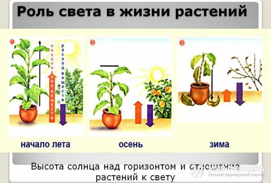 Влияние света на комнатные растения