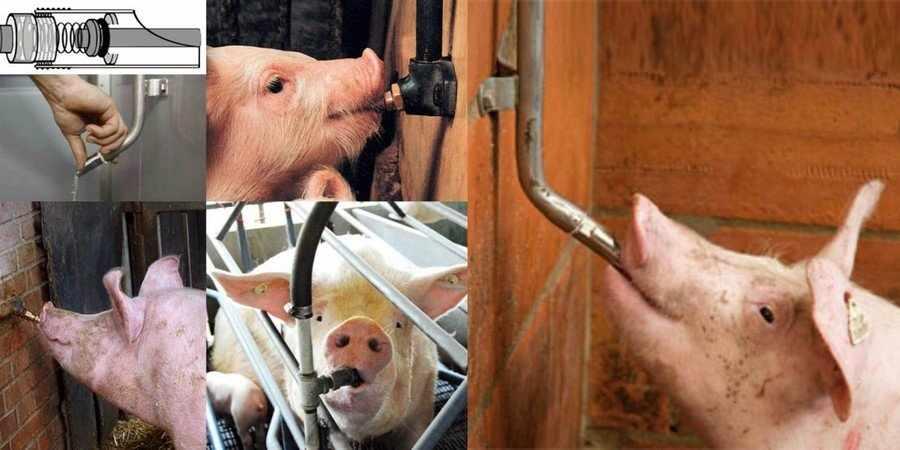 Ниппельные поилки для свиней