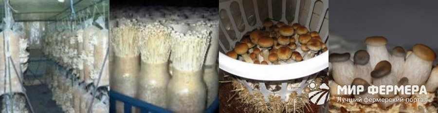 Как самому вырастить грибы