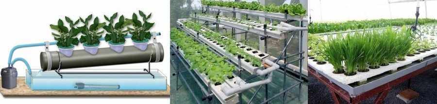 Выращивание укропа на гидропонике
