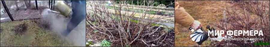 Полив смородины ранней весной
