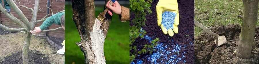 Уход за плодовыми деревьями весной